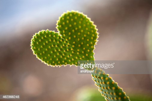 Cactus Heart : Stock Photo