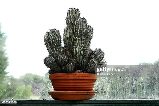 Cactus in a terracotta pot