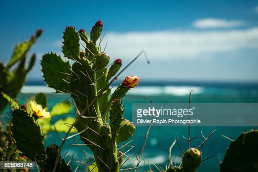 Cactus in front of the ocean