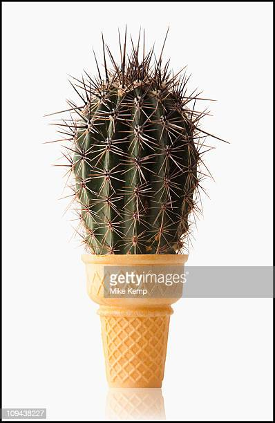 Cactus in Ice Cream Cone