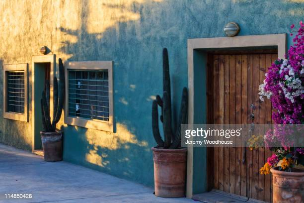 Cactus in potted plants near wooden door