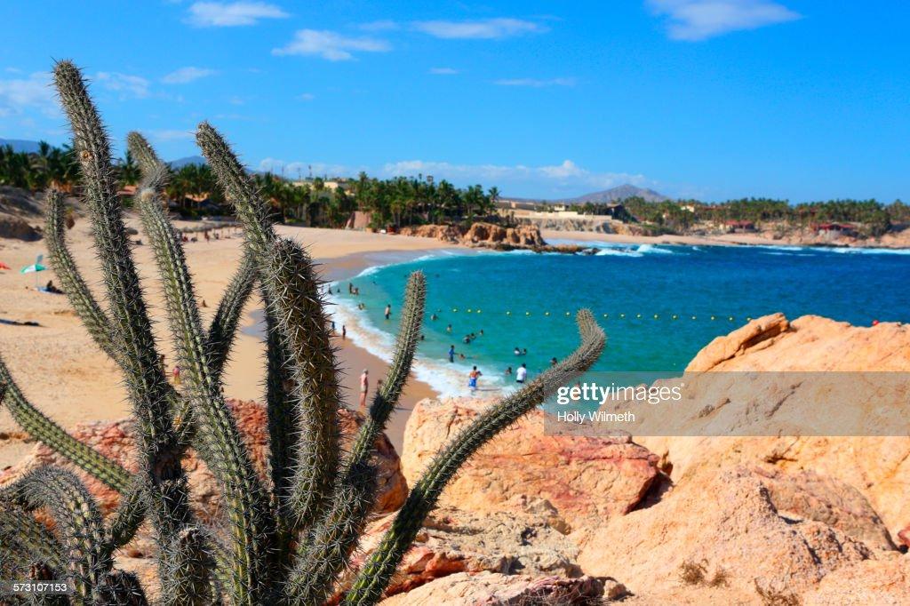 Cactus on rocky hilltop over sandy beach