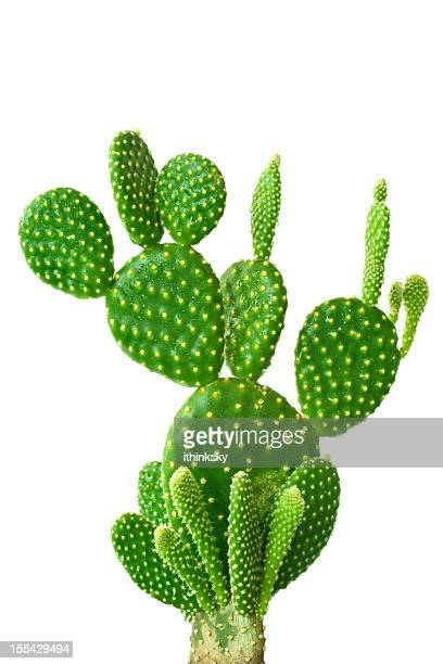 cactus stock photos and pictures getty images