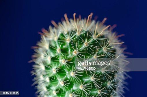 Cactus : Stock Photo