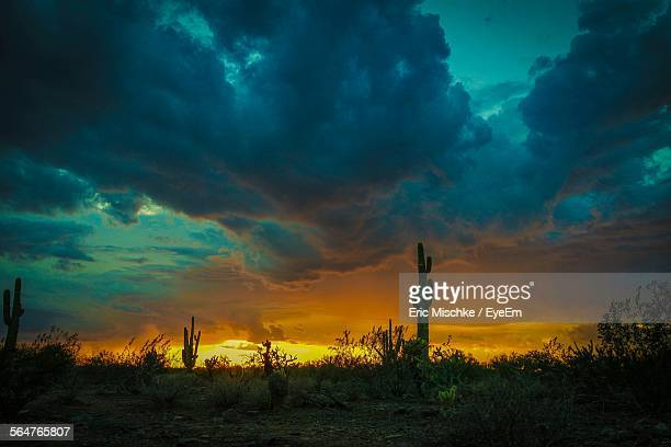 Cactus Plants Growing In Desert Against Cloudy Sky During Sunset