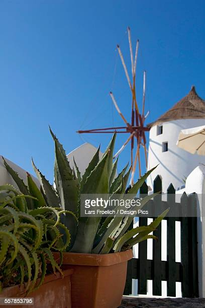 Cactus plants in pots and a white building against a blue sky