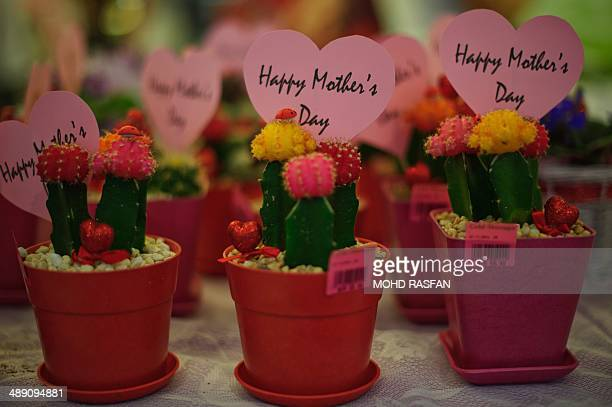 Cactus plants with messages 'Happy Mother's Day' are displayed at a shopping mall in Kuala Lumpur on May 10 2014 Mothers Day is celebrated around the...