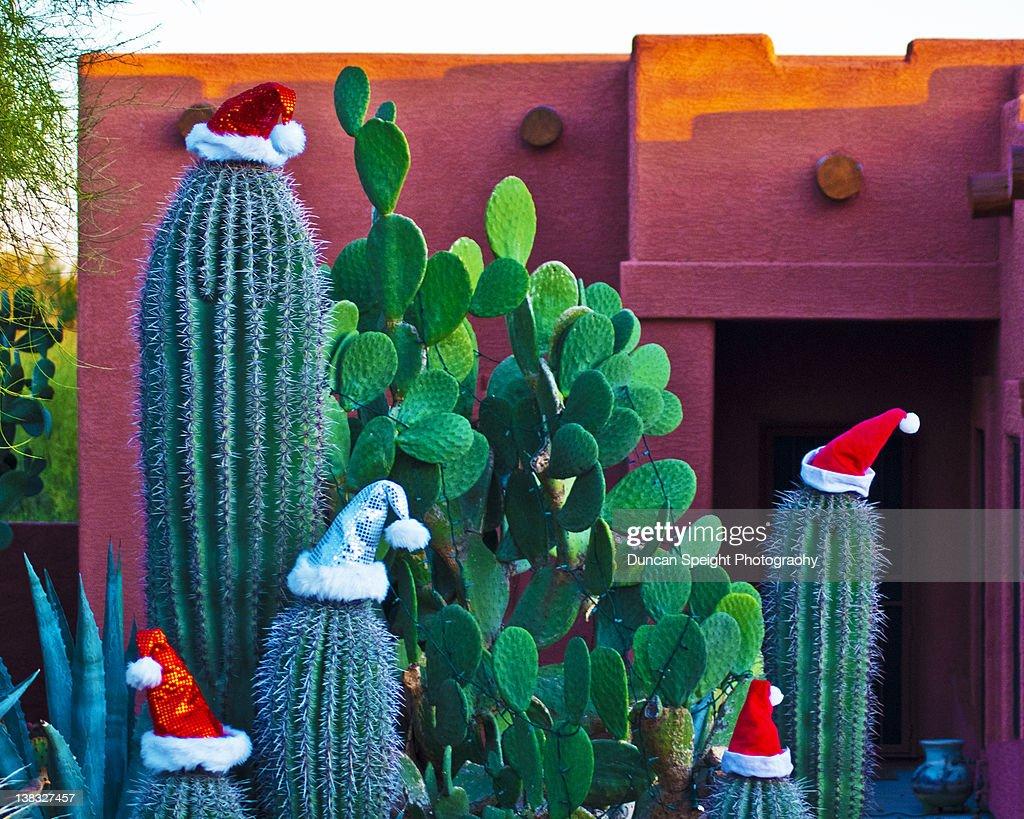 Cactus Santas