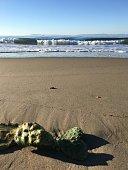 Cactus washes ashore