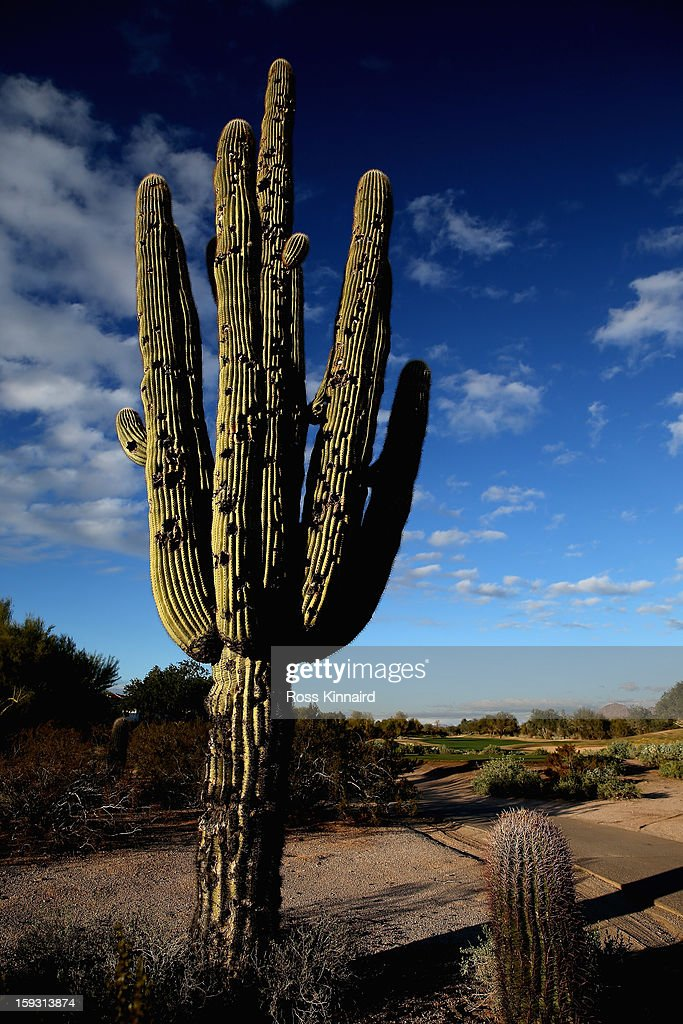A cactus which has been struck by golf balls on 9th hole on The Tallon Course at the Gray Hawk Golf Club, Scottsdale on December 26, 2012 in Scottsdale, Arizona.
