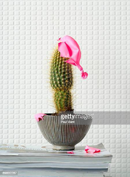 cactus with balloon popped on top