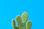 Cactus with cyan backgrounds, Summer creative concept, Minimal style.
