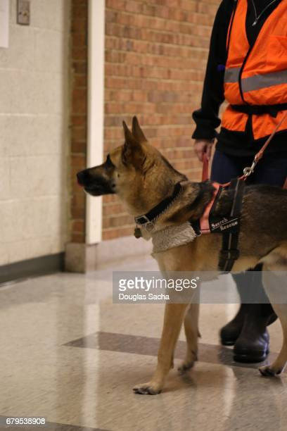 Cadaver Dog and trainer searches for victims in a disaster exercise