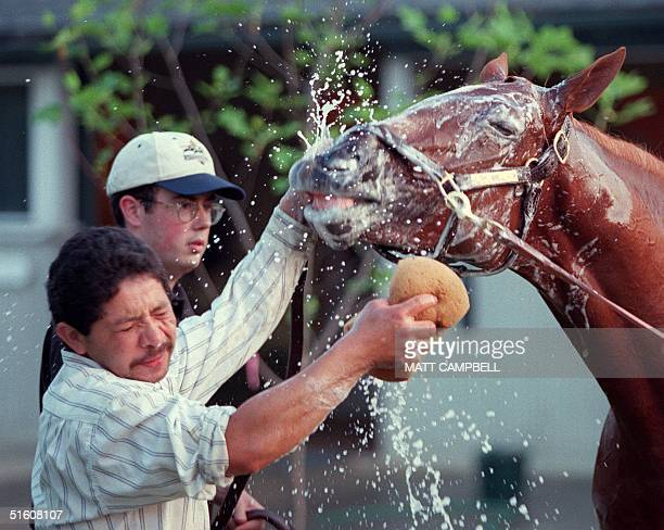 Caesar Arredondo groomer and Andy Rehm barn foreman wash down Triple Crown contender Charismatic at Belmont race track 03 June in Elmont NY...