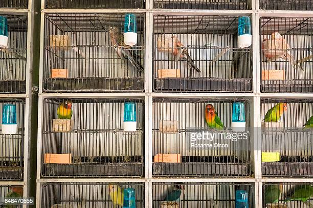 Caged exotic birds in a Paris market.
