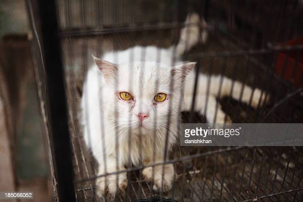 En cage triste Chat persan Animalerie