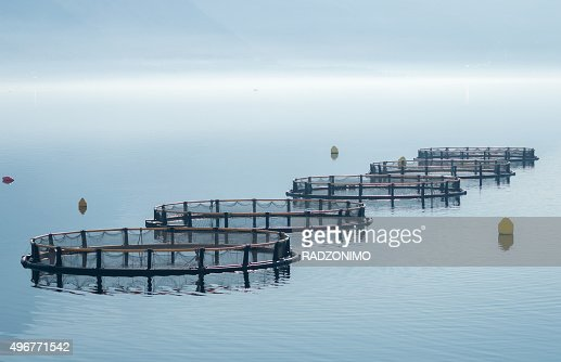 Cages for fish farming : Stock Photo