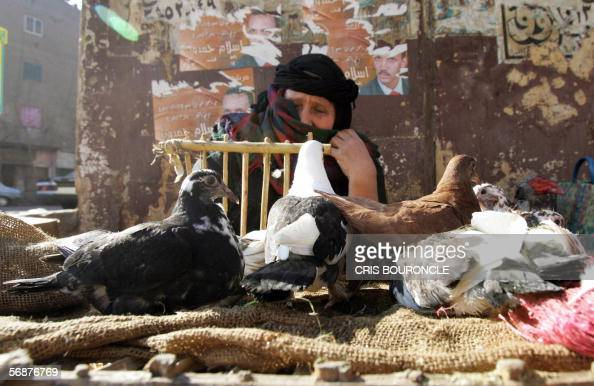 An Egyptian woman sells pigeons a national staple in a street market in Cairo 18 February 2006 less than a day after the first cases of bird flu had...