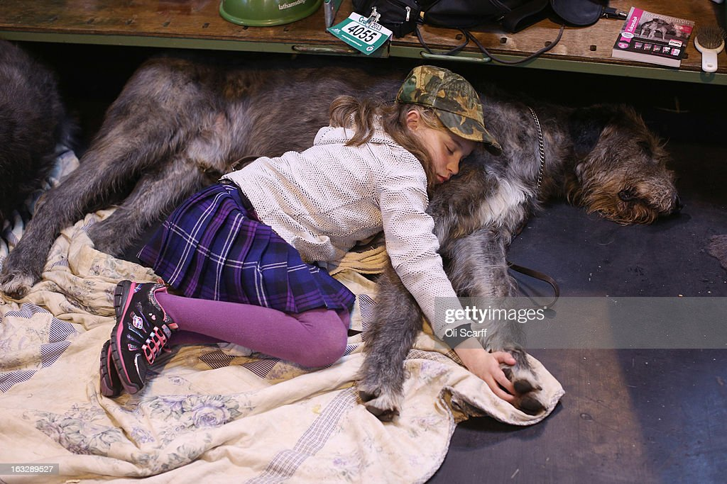 Caitlin, aged 9, sleeps on her Irish wolfhound on the first day of Crufts dog show at the NEC on March 7, 2013 in Birmingham, England. The four-day show features over 25,000 dogs, with competitors travelling from 41 countries to take part. Crufts, which was first held in1891, sees thousands of dogs vie for the coveted title of 'Best in Show'.