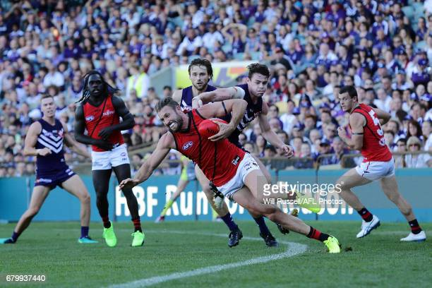 Cale Hooker of the Bombers tries the keep the ball in play under pressure from Lachie Neale of the Dockers during the round seven AFL match between...