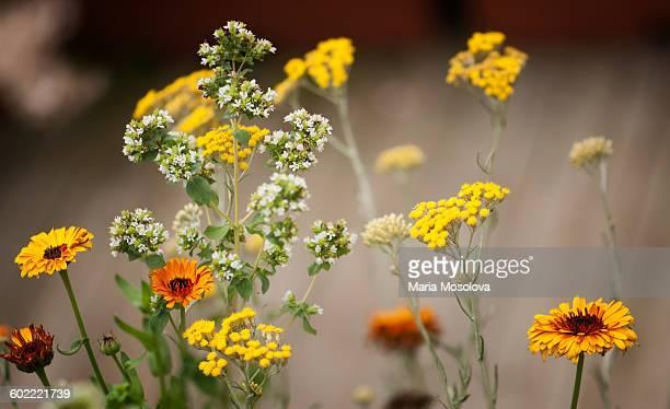 Calendula, tansy, thyme flowers