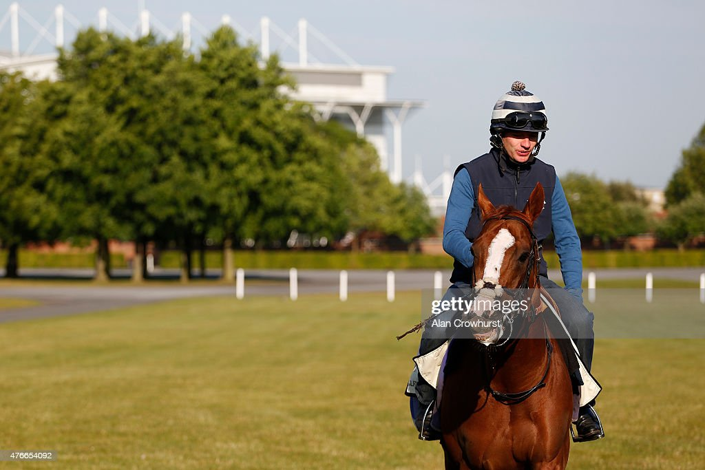 Calfornia Chrome before having a gallop on the Waterside gallops prior to racing at the Royal Ascot meeting in Newmarket on June 11 2015 in Newmarket...