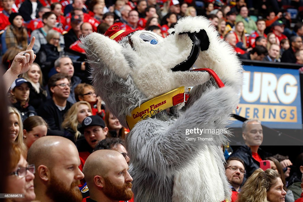 Calgary Flames mascot Harvey the Hound watches the game with the crowd against the Pittsburgh Penguins at Scotiabank Saddledome on February 6 2015 in...