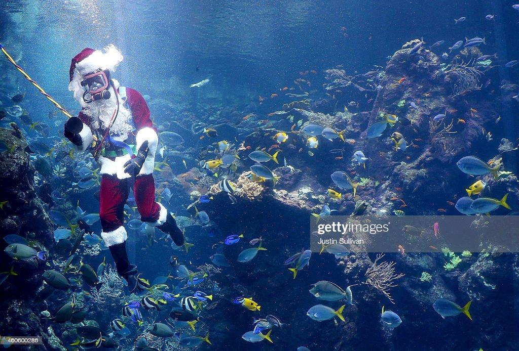 Scuba Diver Dressed As Santa Entertains Children At