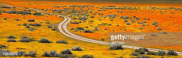 USA, California, Antelope Valley, Aerial view of an empty road through flatland