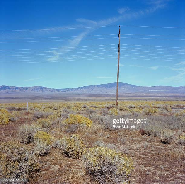 USA, California, Bakersfield, telephone pole in desert