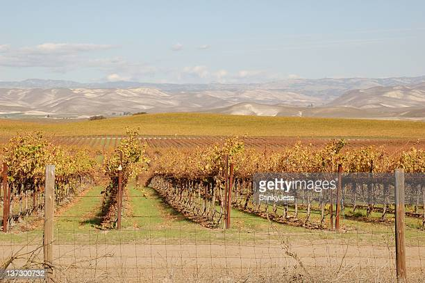California Central Valley Vineyard after harvest