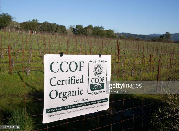 California Certified Organic sign is posted on a fence at a Sonoma Mountain vineyard on February 22 near Glen Ellen California After record rainfall...