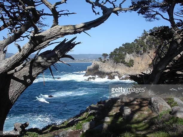 California Coastal scene near Monterey