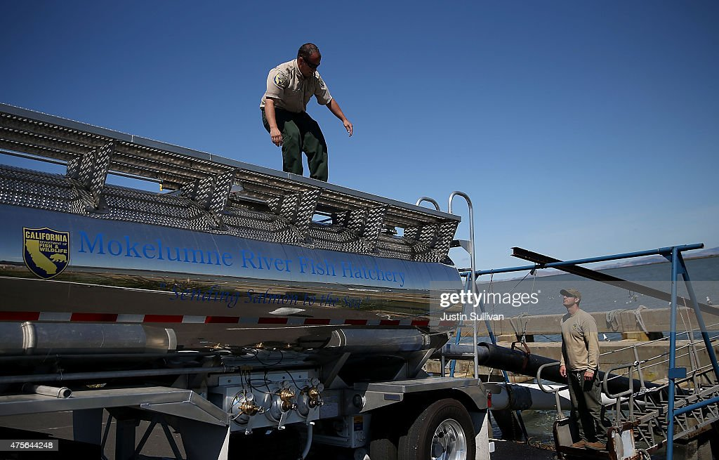 Drought plagued california gives salmon a boost downstream for Ca game and fish