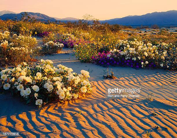 Deserto da Califórnia