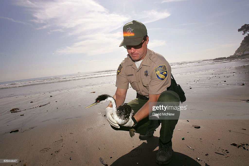 Mysterious oil spill hurts hundreds of sea birds getty for Georgia game and fish