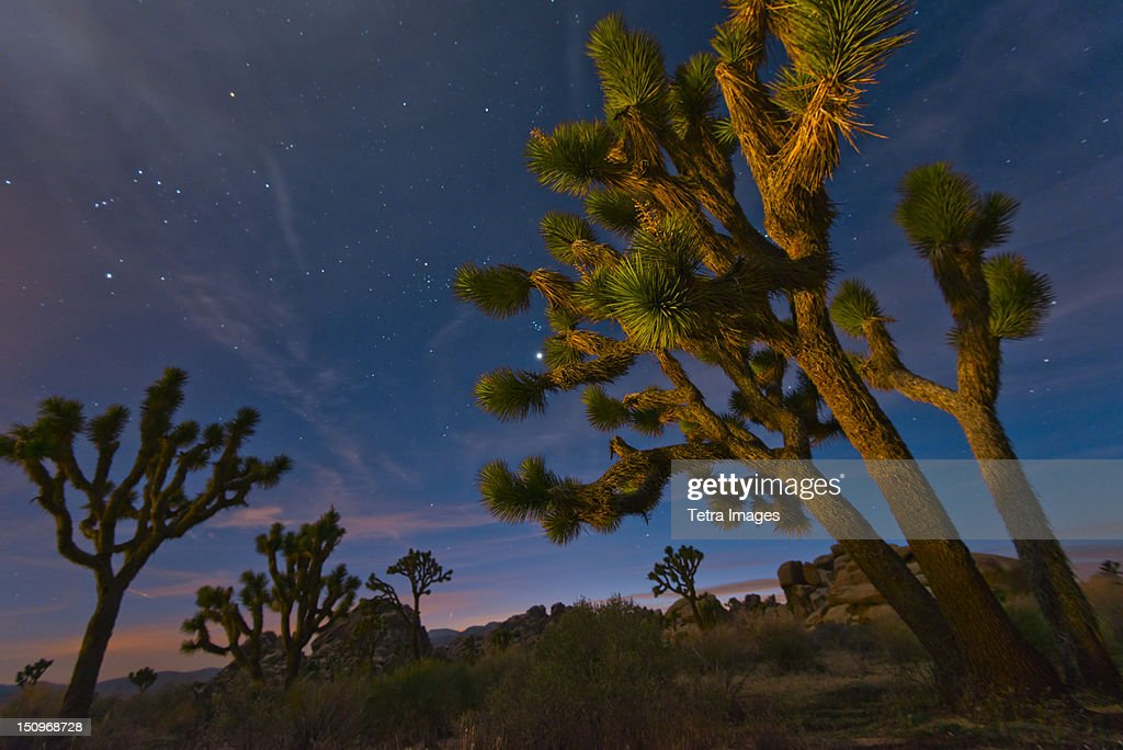 USA, California, Joshua Tree National Park at dusk