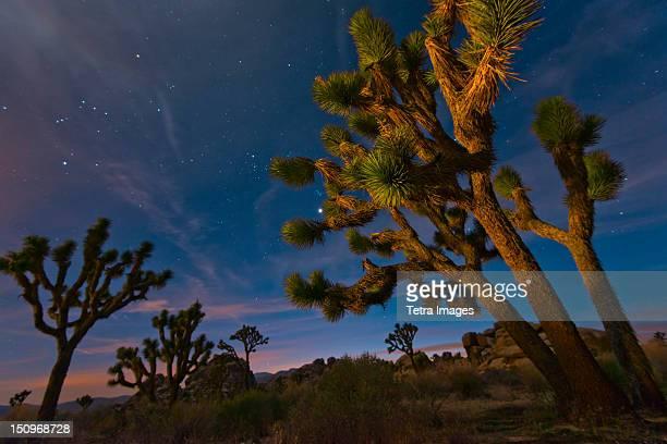 USA, California, Joshua Tree National Park at dusk