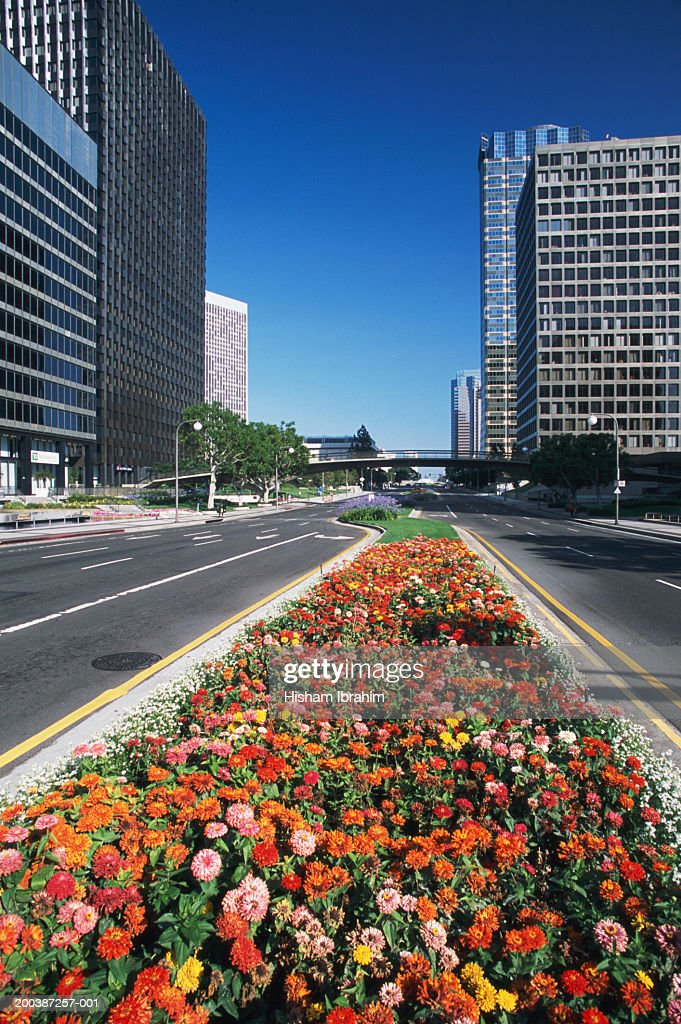 USA, California, Los Angeles, Century City, flowers by road