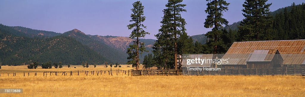 'USA, California, near Taylorsville, metal-roofed barns and fences in field, autumn' : Stock Photo