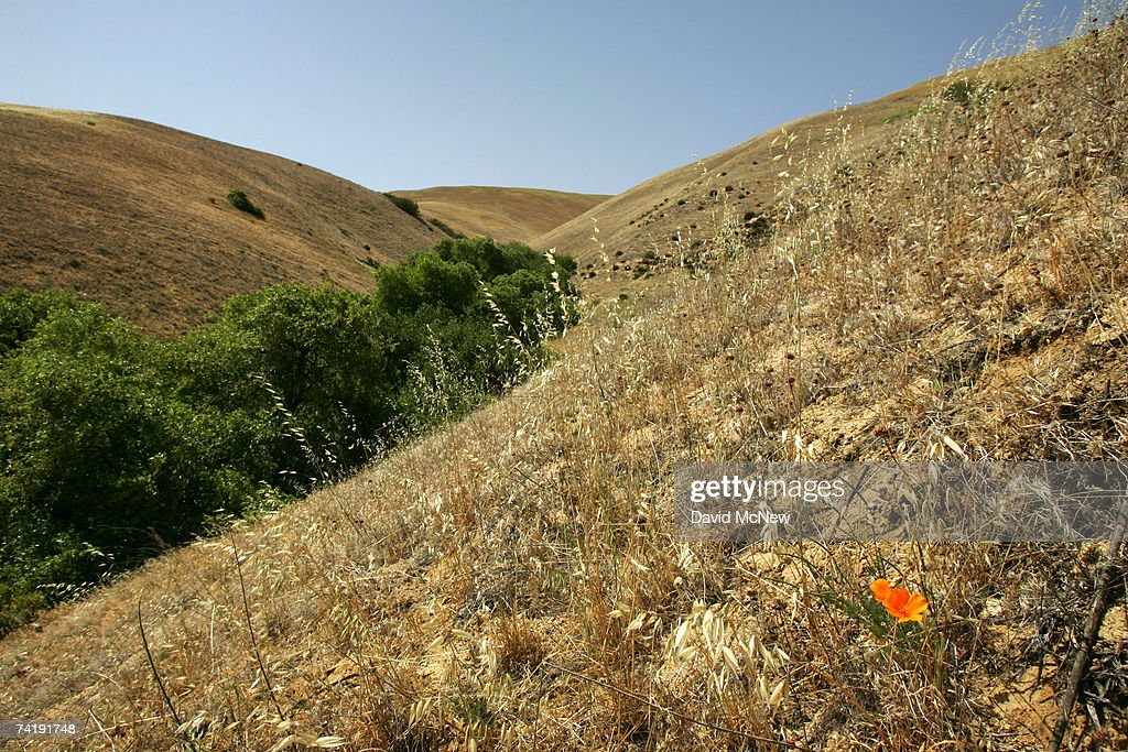 A California poppy blooms in a desiccated hillside where thigh-high wildflowers blanketed the landscape three years earlier, on May 18, 2007 near Gorman, California, 60 miles north of Los Angeles. The rain season in Los Angeles is shaping up as the driest since record-keeping began in 1872 and the region is now in an 'extreme' drought state, the second-driest ranking given by the National Drought Mitigation Center in Lincoln, Nebraska. Bark beetle infestations induced by overgrowth from the second-wettest winter on record two years ago have killed untold thousands of pines in the mountain areas. Fire officials say that conditions are right for wildfires of disastrous proportions and frequency in southern California this year.