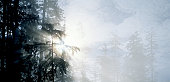 USA, California, Redwoods NP, sunbeams through fog and trees, sunrise