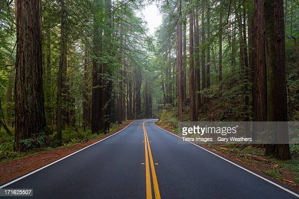 USA, California, Road in forest