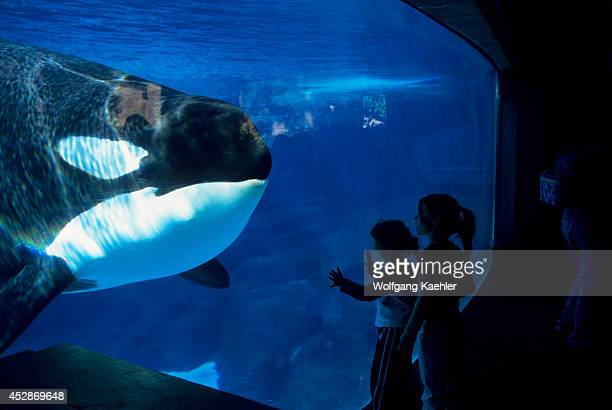 USA California San Diego Sea World Killer Whale Underwater People