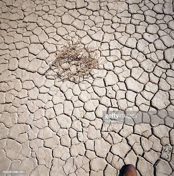 USA, California, Santa Barbara, dry lake bed at Gibraltar Dam