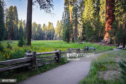 USA, California, Sequoia National Park, Big Tree Walk