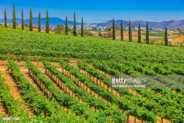California spring vineyard in the Temecula Valley, CA