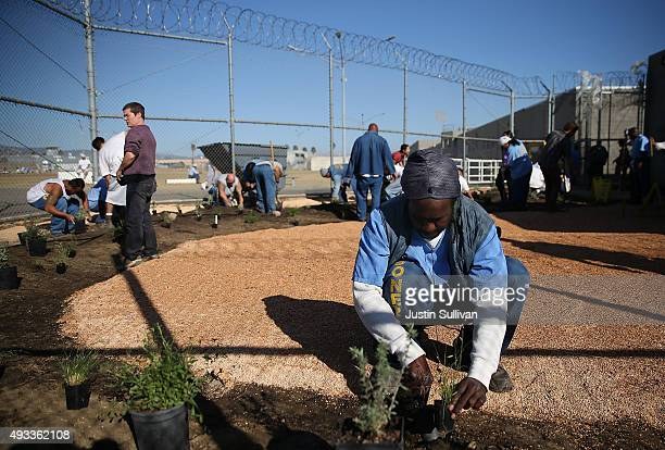 California State PrisonSolano inmate installs a droughttolerant garden in the prison yard on October 19 2015 in Vacaville California Inmates at...