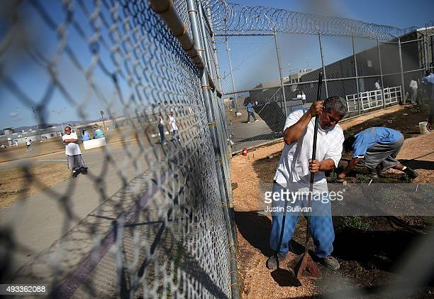 California State PrisonSolano inmate uses a hand tool to pack decomposed granite while installing a droughttolerant garden in the prison yard on...