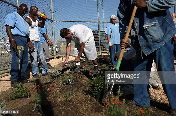 California State PrisonSolano inmates install a droughttolerant garden in the prison yard on October 19 2015 in Vacaville California Inmates at...